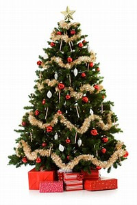 this might be a bit late with advice but some havent put up their real christmas tree yet so these will help for the ones that have i am thinking water - What Do You Put In Christmas Tree Water