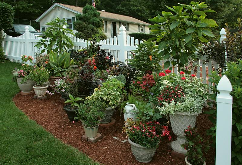 Container gardening helpful hints Remember the containers will take some time to grow to look like this